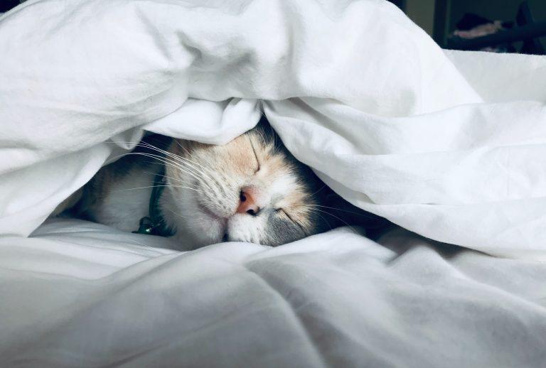 Cat sleeping and importance of sleep